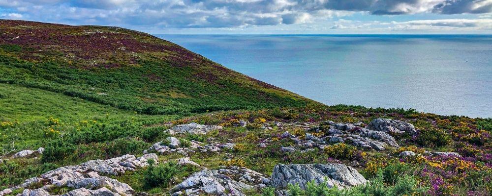 Bergen, zee en gras